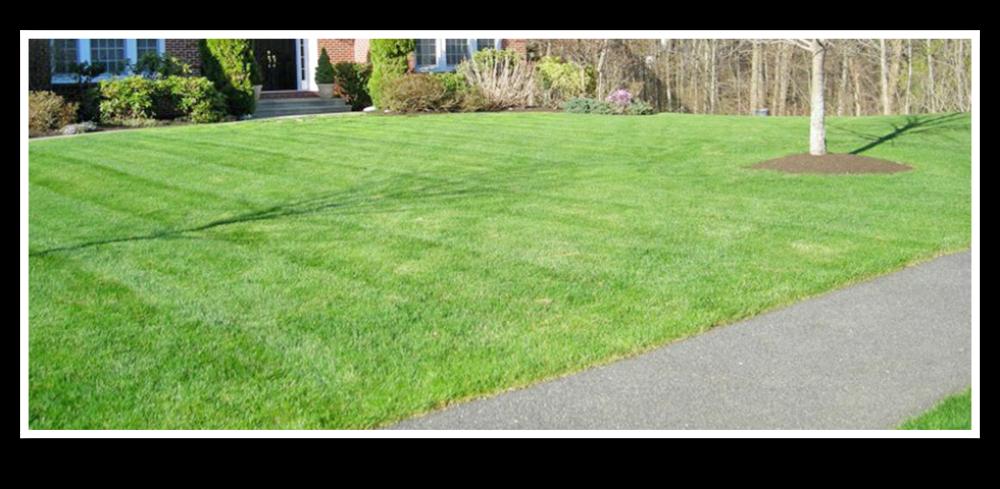 Precision Landscape Management Inc. image 1