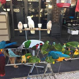 Macaws and Parrots Store image 4