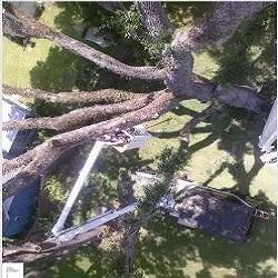 Windsor & Son Tree Service image 4