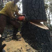 Morgan Tree Service image 8