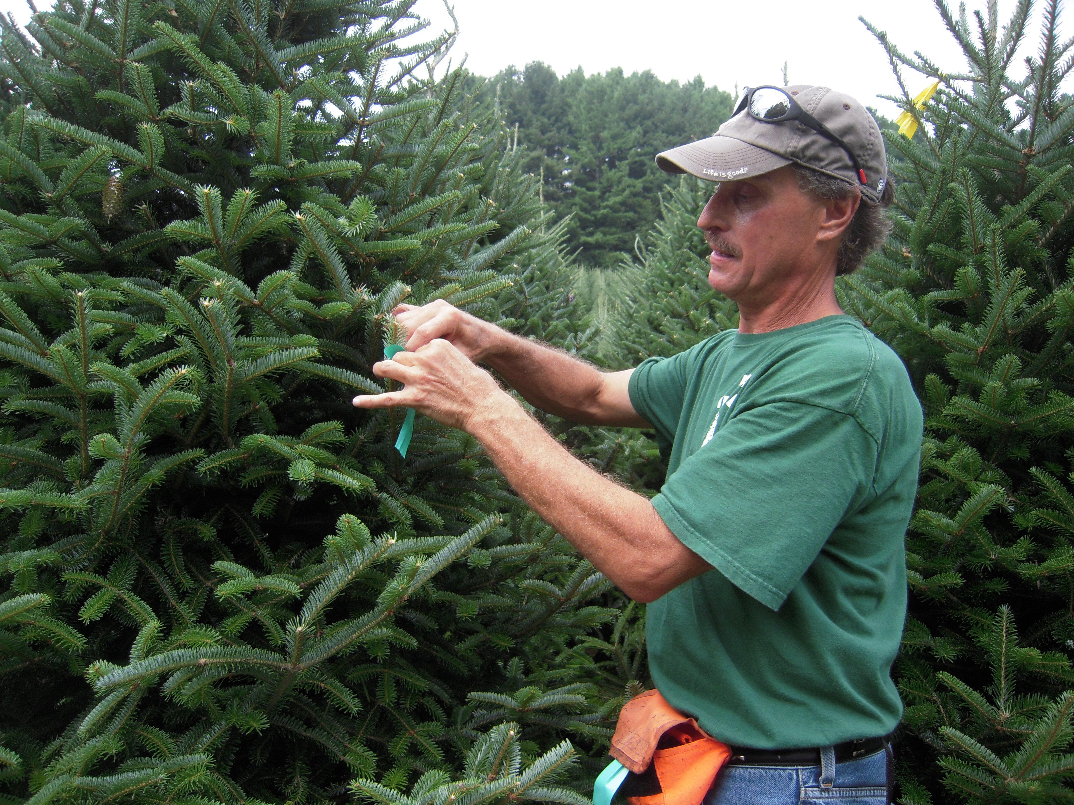 Dave's Christmas Tree Lot image 92