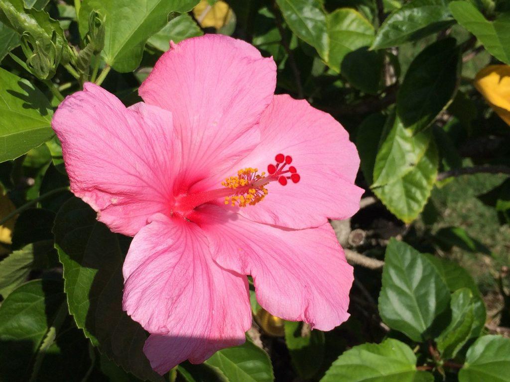 Ahh Aloha Kauai Vacation Services image 25