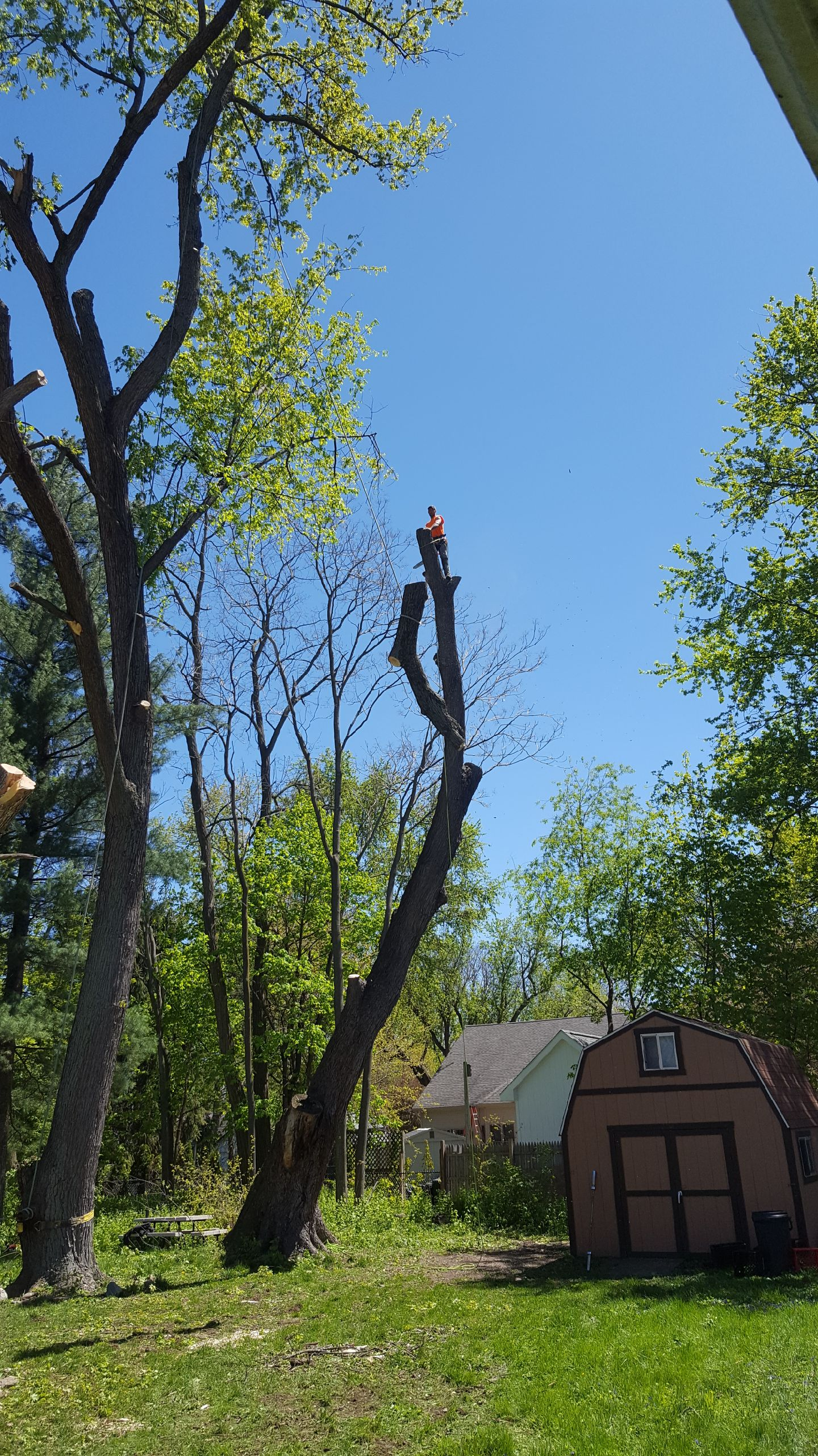 Coffman's Tree Service image 36