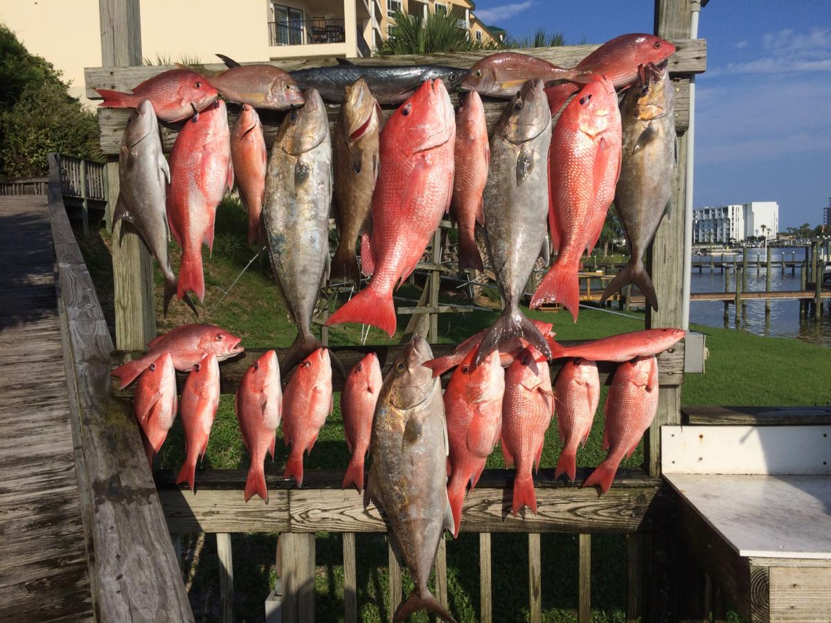 Championship Offshore Outfitting and Charters image 0