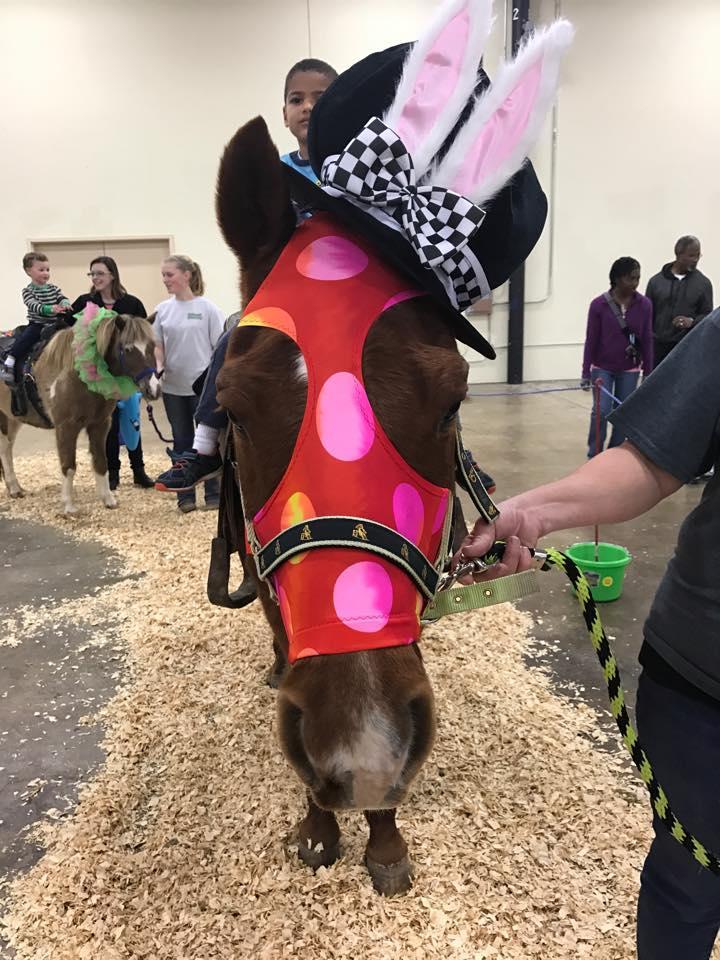 Equestrian Enterprises, Inc. image 6