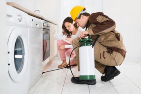 Clean & Treat Environmental Pest Control image 0