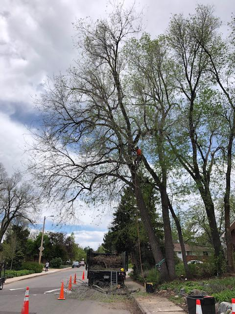 Western Cut Tree Care image 3
