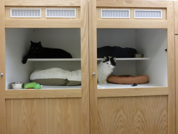 We now have a cat hotel! Call us to schedule a tour or book a place for your cat to stay while you are away.