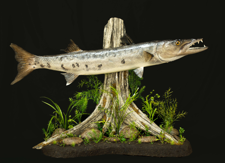 Natures Wildlife Artist Studio of Taxidermy image 1