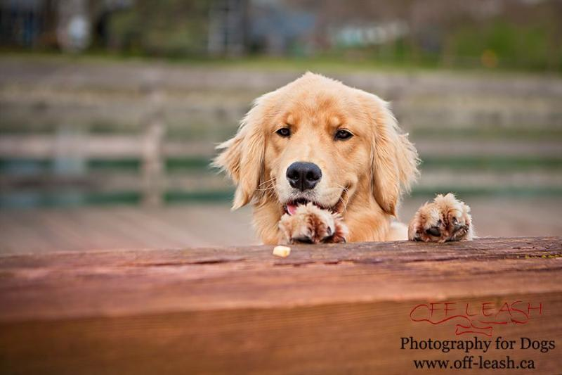 Off-Leash Photography