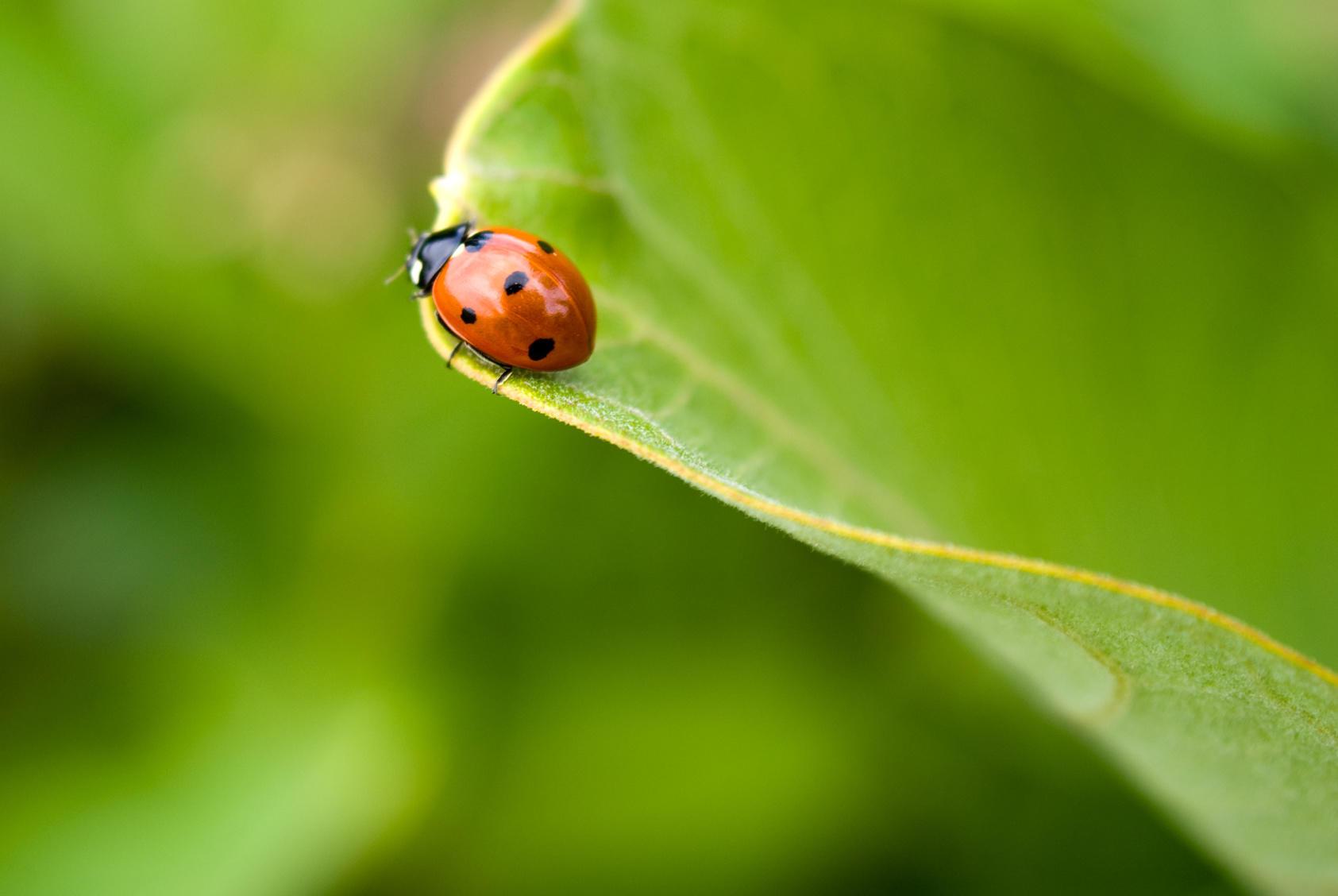 Verminator Pest Control LLC image 10