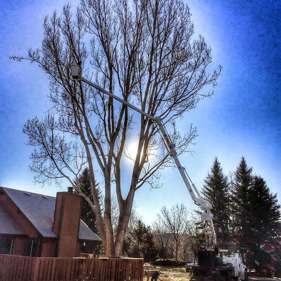 Foothills Tree Experts image 1