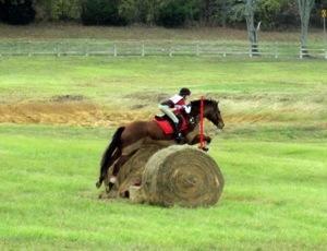 Salem Equestrian Center image 9