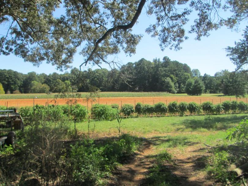 Walker Farm image 8