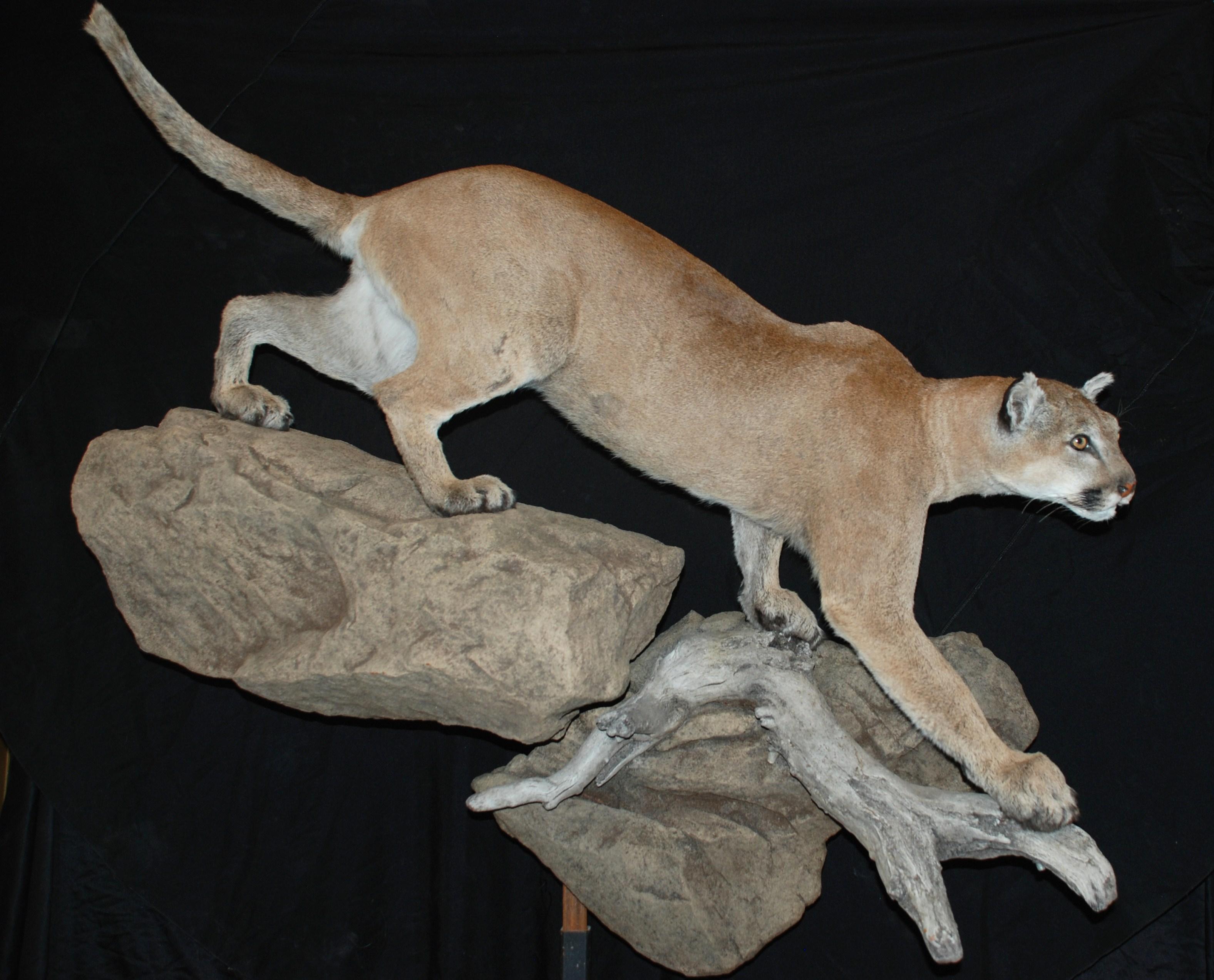 Wildlife Creations Taxidermy image 1