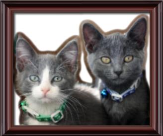 Dr. Dawn's Pet Stop LLC image 5