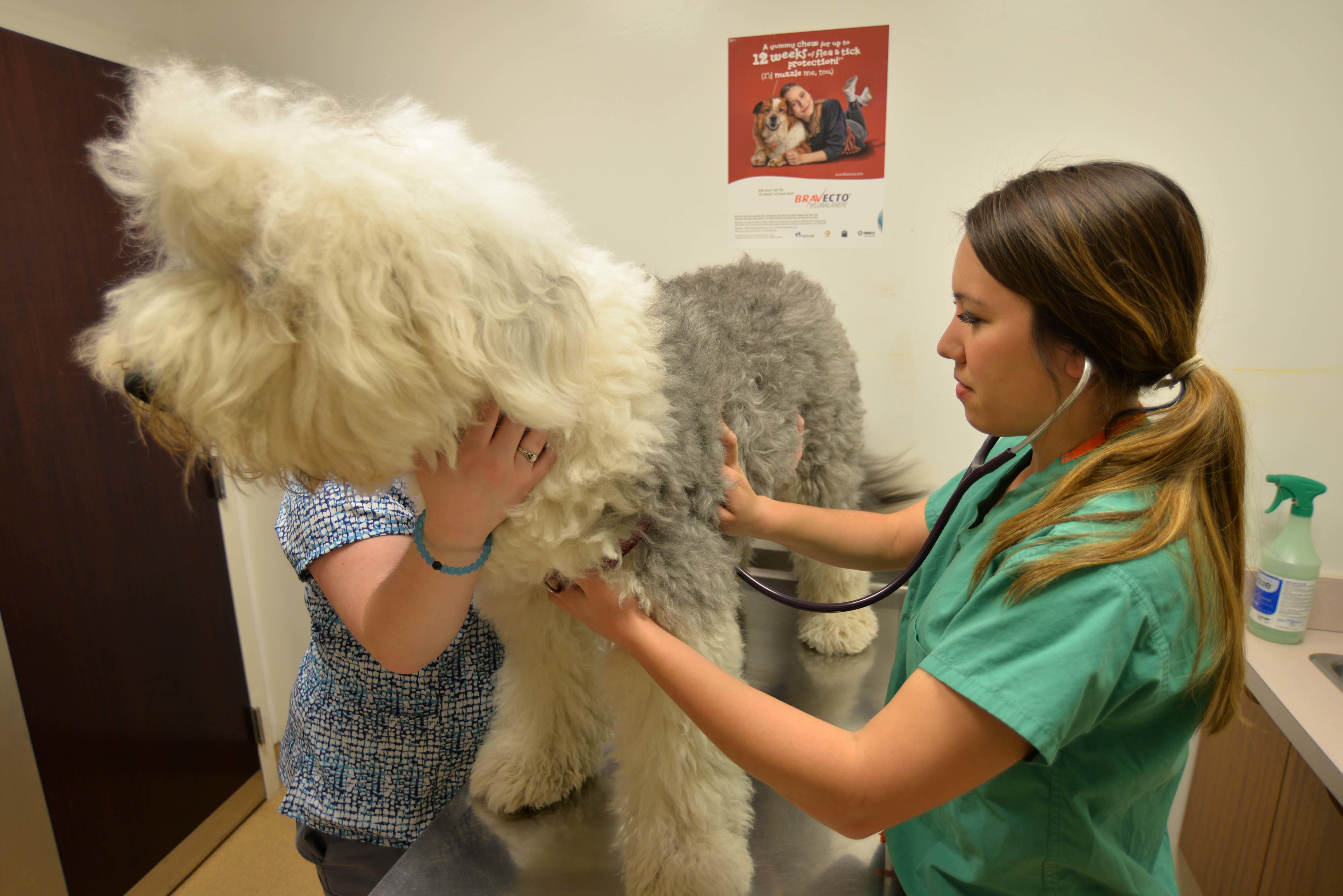 Archer Veterinary Clinic image 14