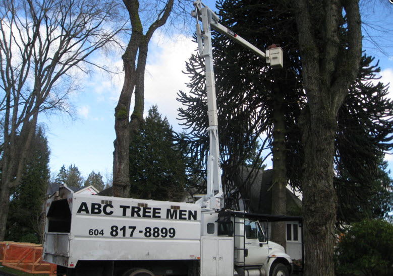 A B C Tree Men in Burnaby