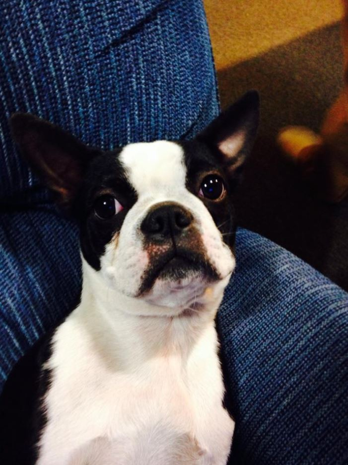 Doggie Daycare & Motel image 25