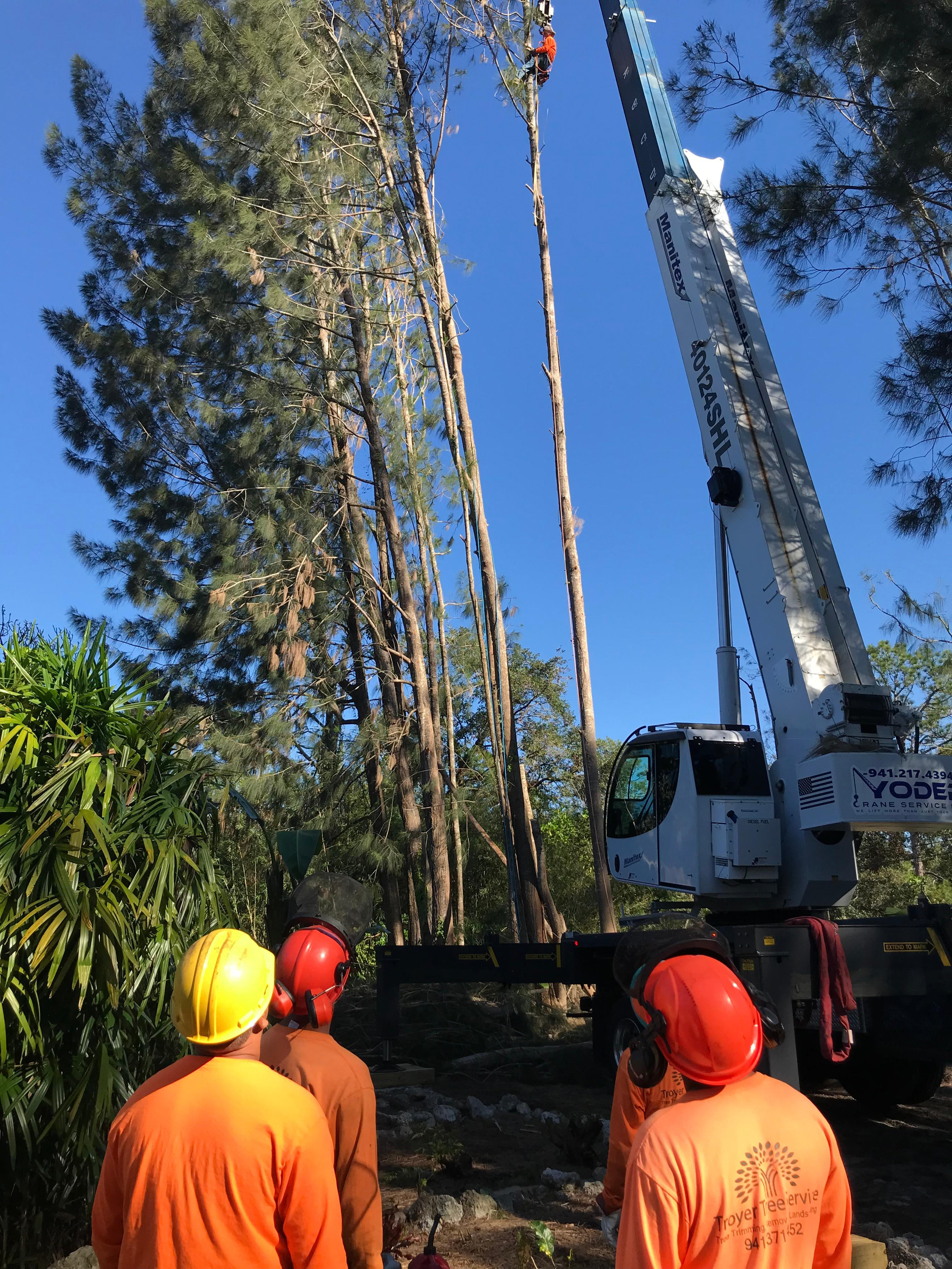 Troyer Tree Service image 3