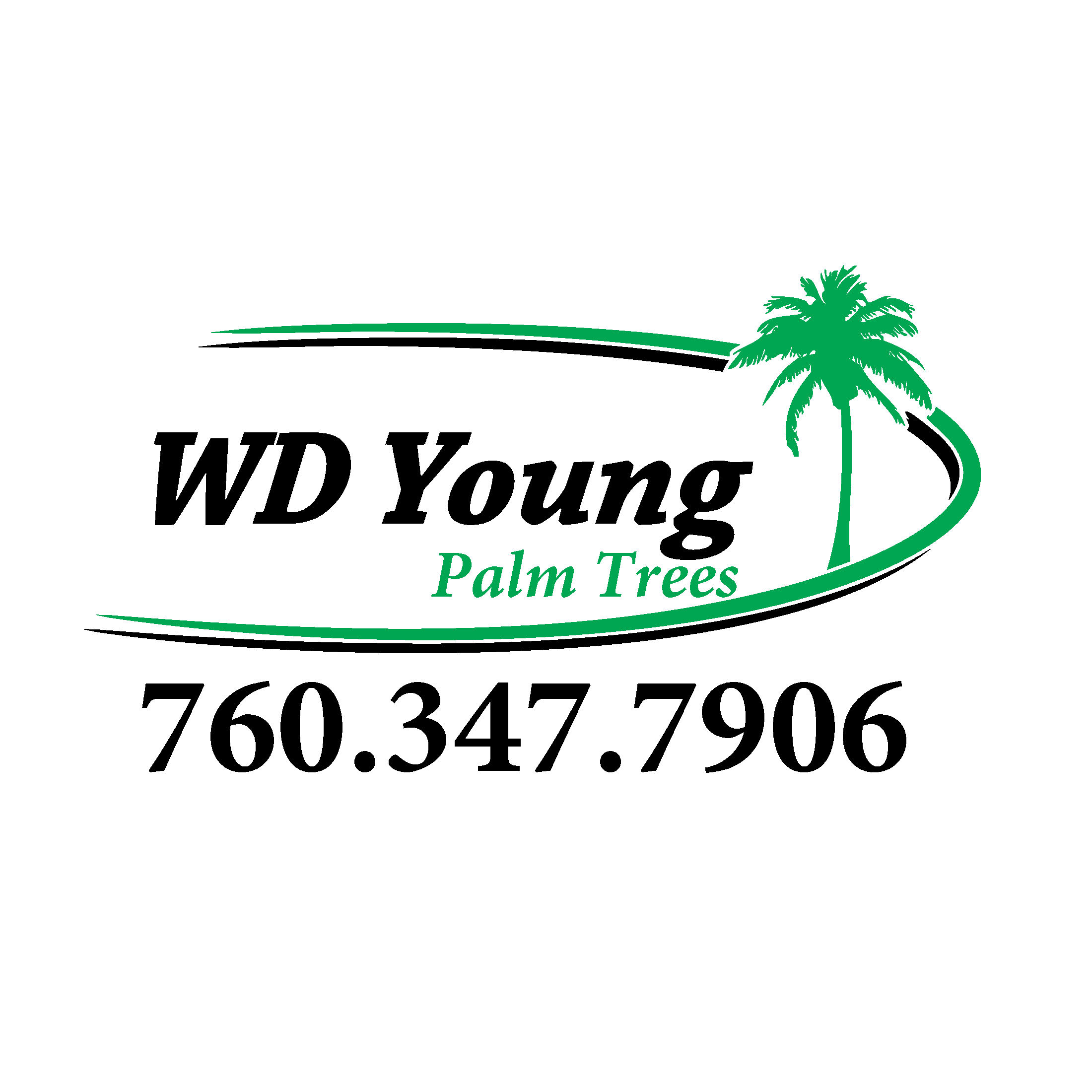 WD Young Palm Trees