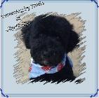 Clip N' Dip Pet Grooming image 1