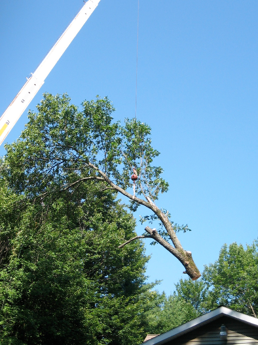 Hill Treekeepers image 7