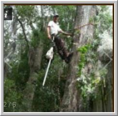 Hamilton Tree Service image 5