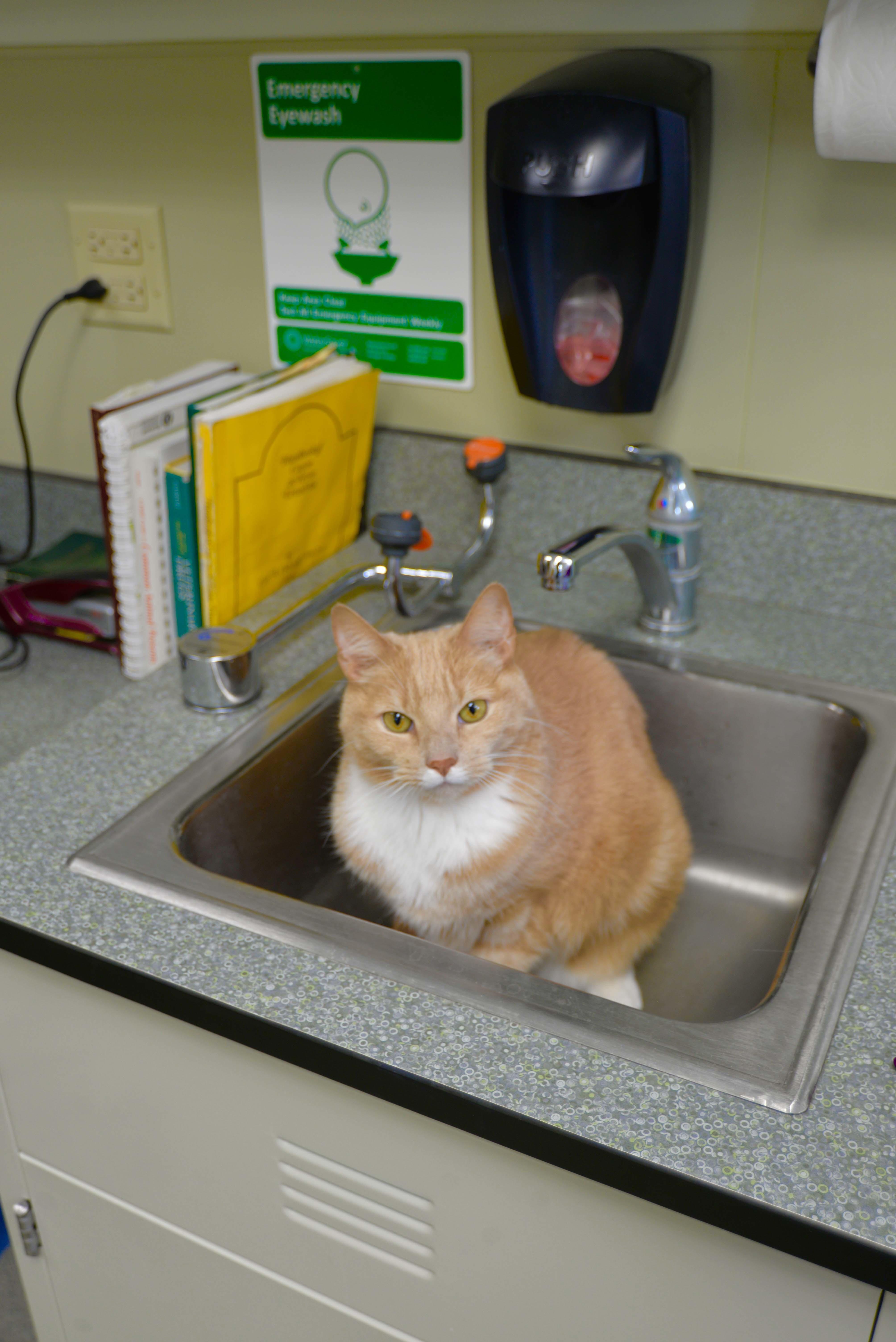 Archer Veterinary Clinic image 7