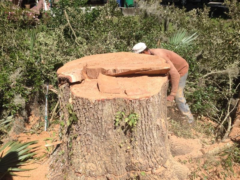 S & L Tree Service & Stump Grinding image 0