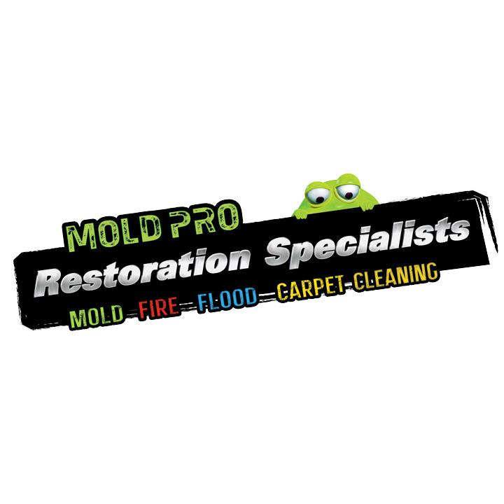 Mold Pro Water Damage Removal Queens