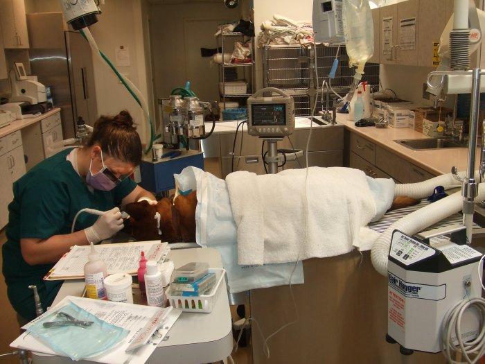 VCA All Pets Animal Hospital Salinas image 2
