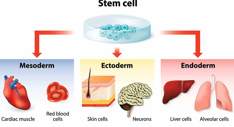 American Stem Cell Therapy image 1