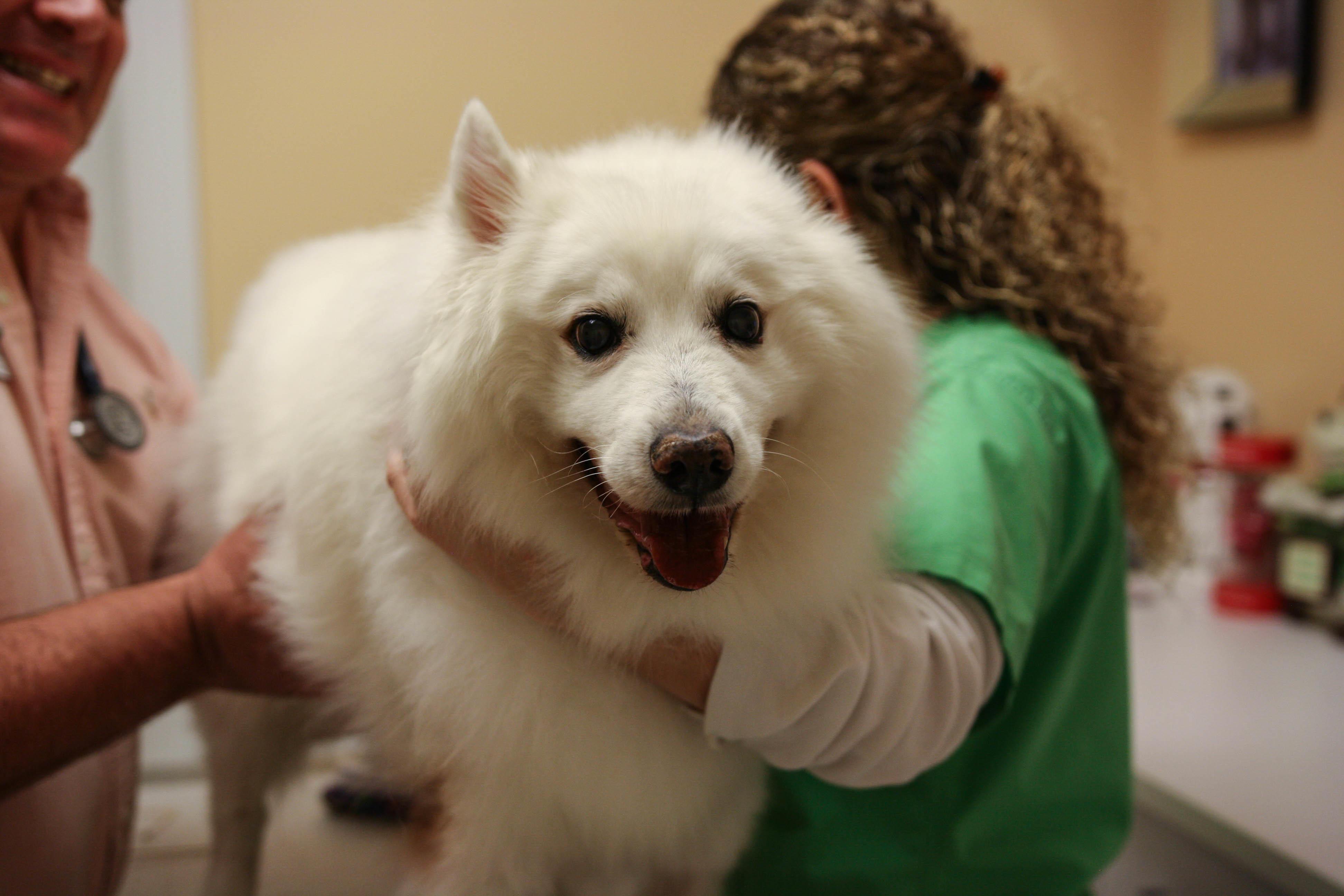 Calusa Veterinary Center in Boca Raton, FL, photo #20