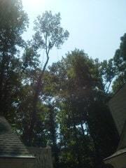 Holcomb Tree Experts image 5