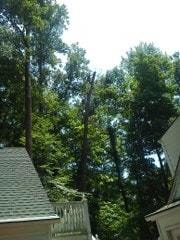 Holcomb Tree Experts image 4
