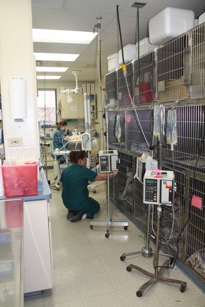 VCA Worth Animal Hospital in Palos Hills, IL, photo #8