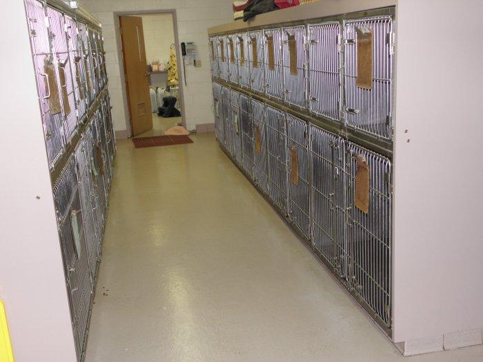 VCA Shadeland Animal Hospital image 2