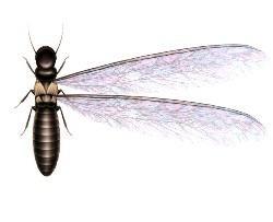Progressive Pest Control image 2