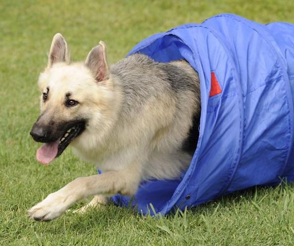 Citizen K9 Dog Training And Agility image 0