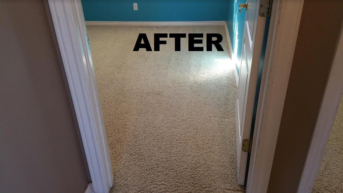 All Clean Carpet Care image 6