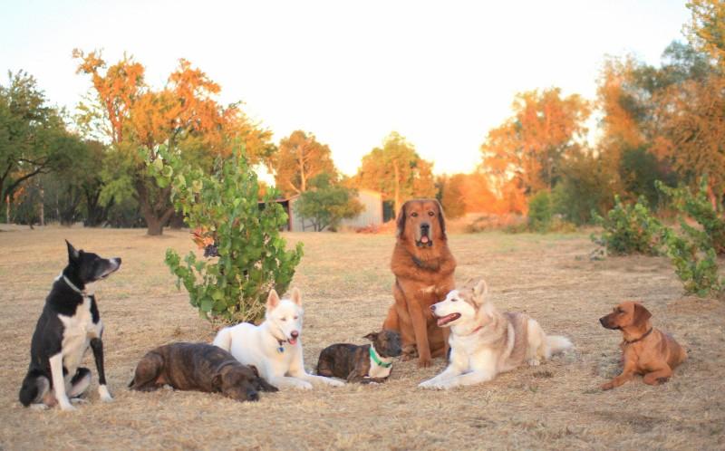 Dog Training Boot Camp Near Me