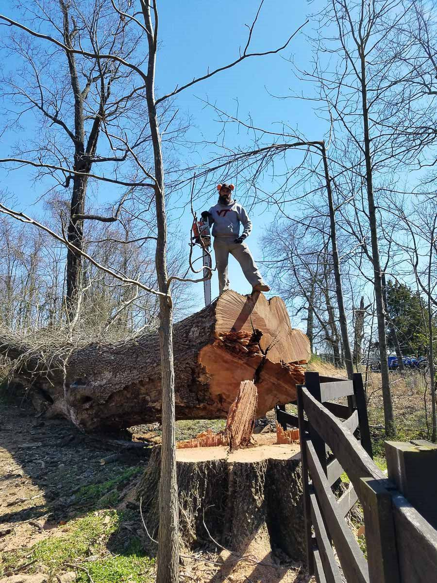 Woody Tree Service image 4