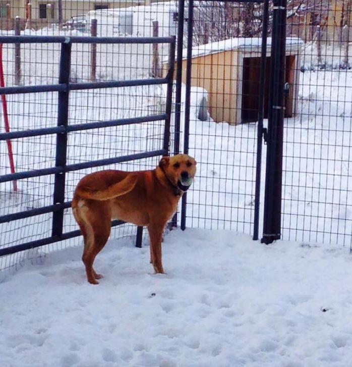 Doggie Daycare & Motel image 15