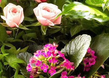 Princess Flowers - ad image