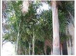 Lawn Patterns Of Tampa Bay image 3