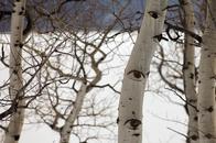 Eye See a Tree....