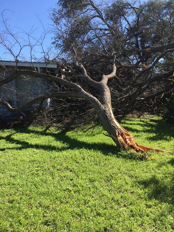 Almanza Tree Trimming Service & More image 1
