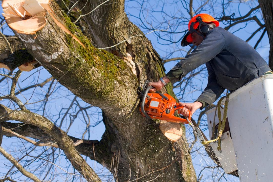 Tree Cutters LLC image 1