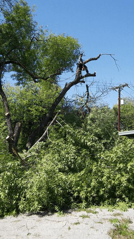 Almanza Tree Trimming Service & More image 5